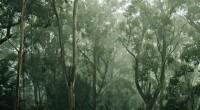 allambie heights village bushfire plan