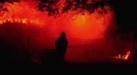 australia burns bushfires 2020